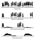 Stages of Harvest Image