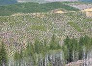 Clearcutting image