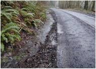 Forest roads Forest_Issues_Roads