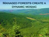 Forest Economic Sustainable Image